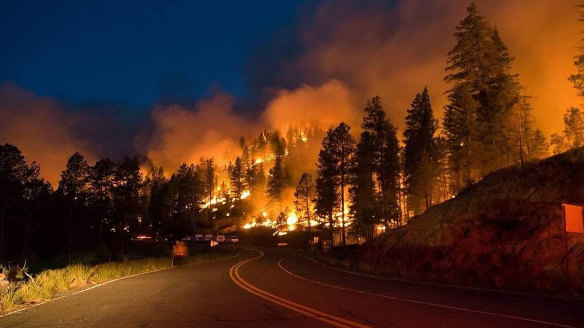 В России масштабный пожар: горит более 900 гектаров леса - фото, видео