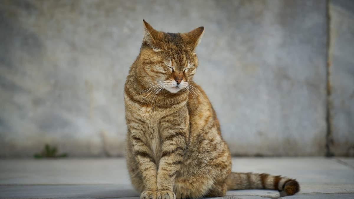На Троещине женщина выбросила из окна кота: он умер на глазах детей