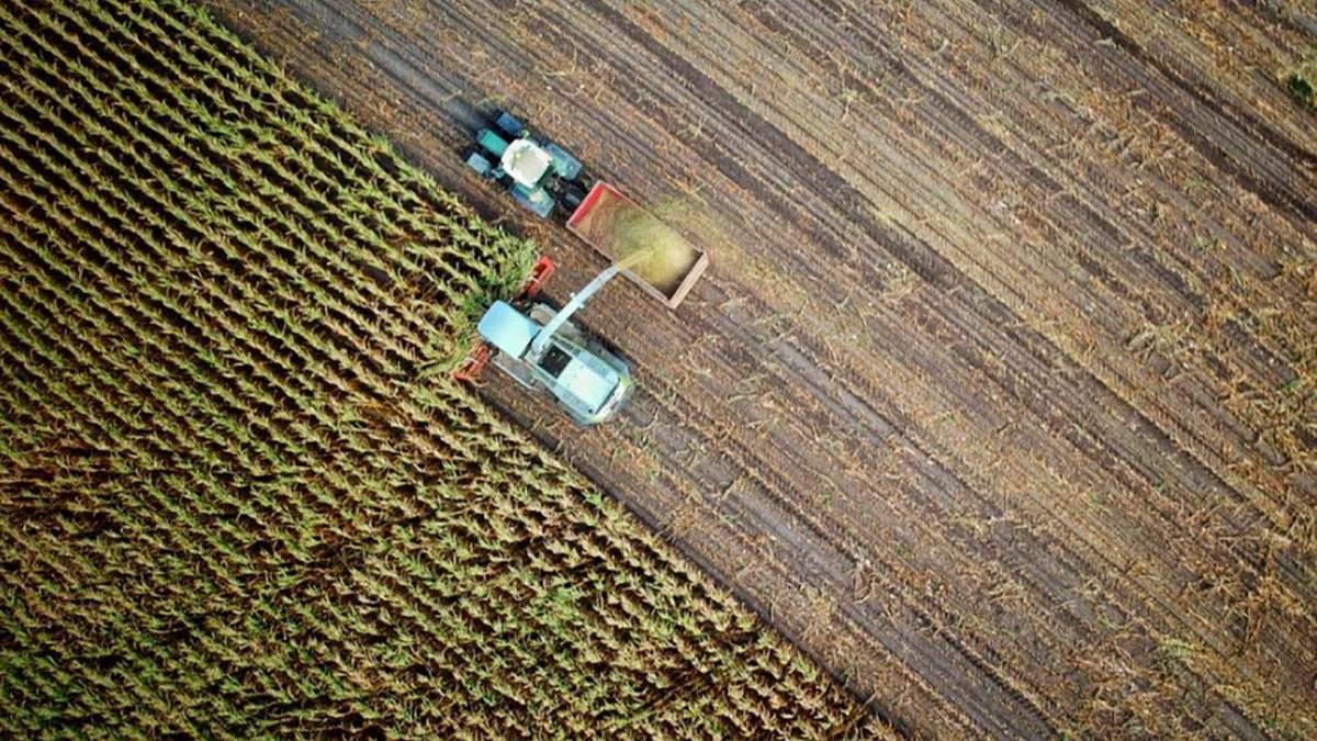 Упадок сельского хозяйства в Крыму: украинцы успешнее россиян