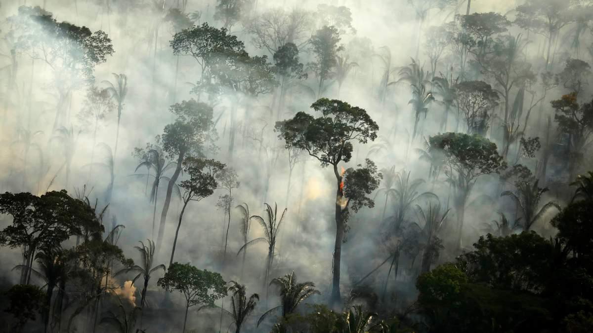 Катастрофа для лесов Амазонки