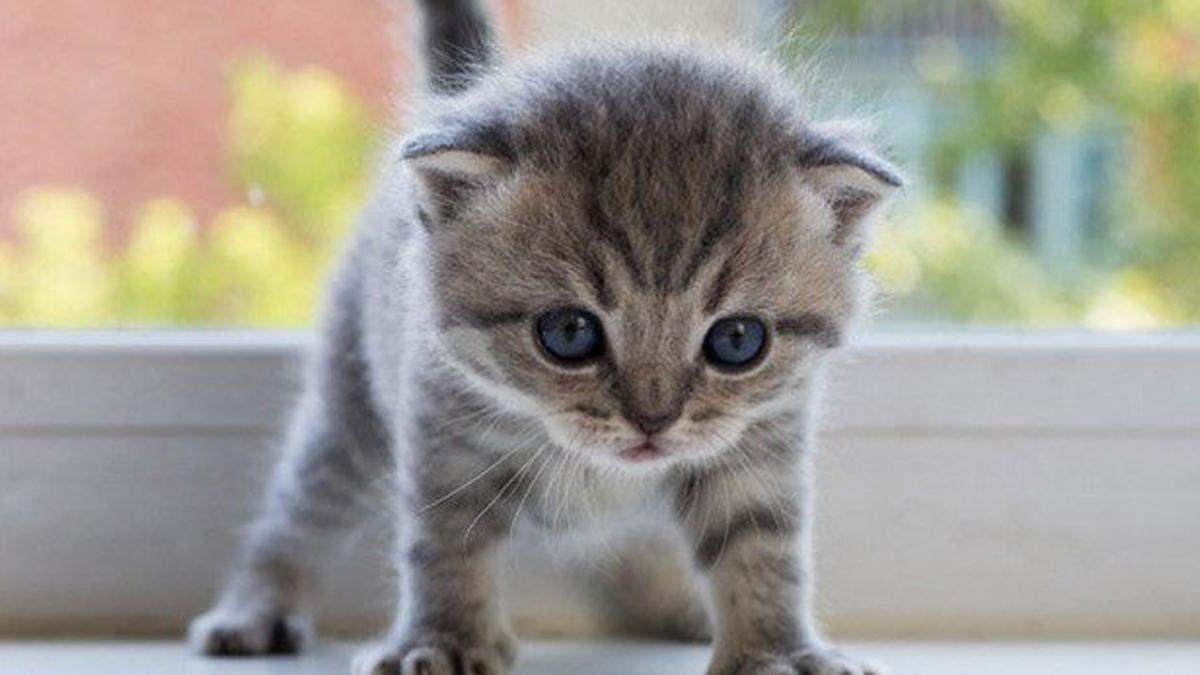 В Киеве нашли больного котенка и отнесли в ветклинику: возник скандал