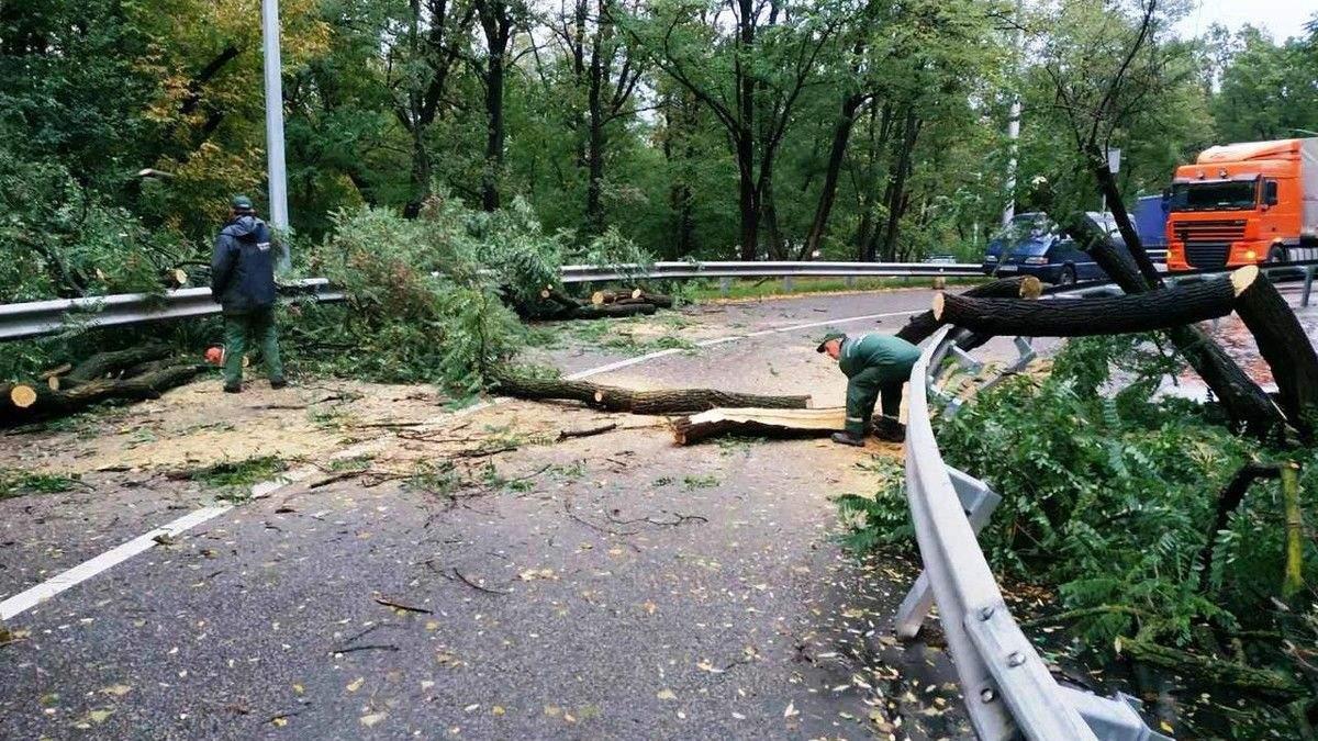 Непогода под Киевом 17 июля 2021 повалила деревья: есть погибшие