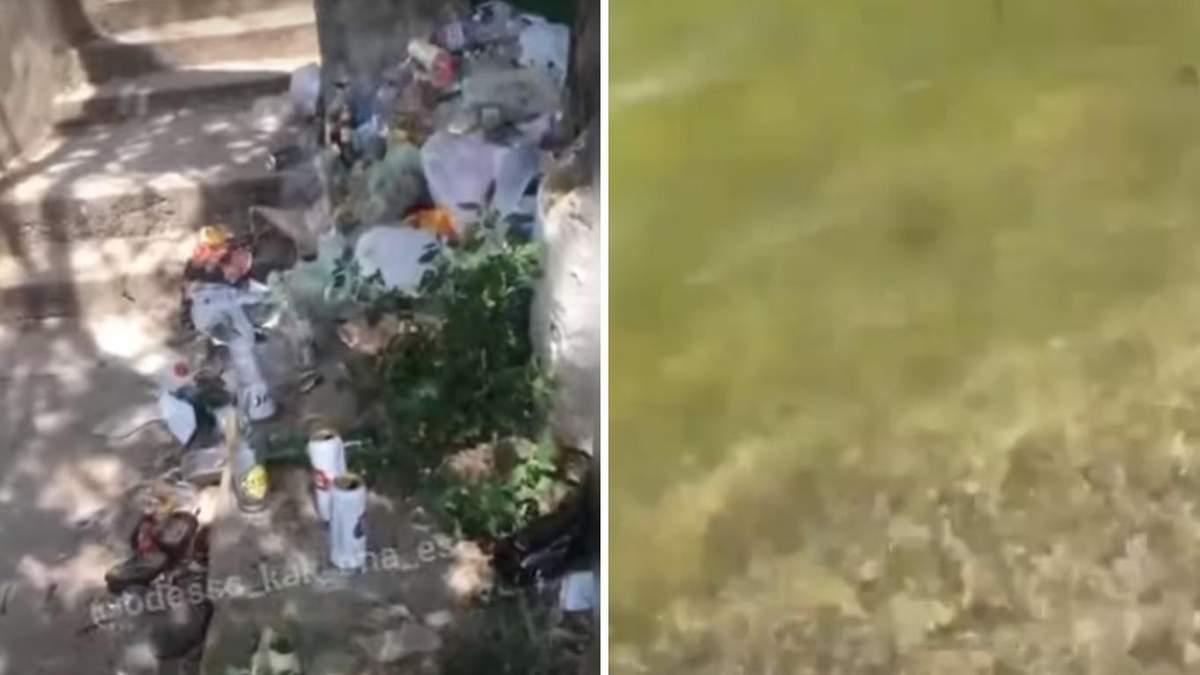Зеленое море и горы мусора: люди возмущаются ситуацией в Заливе