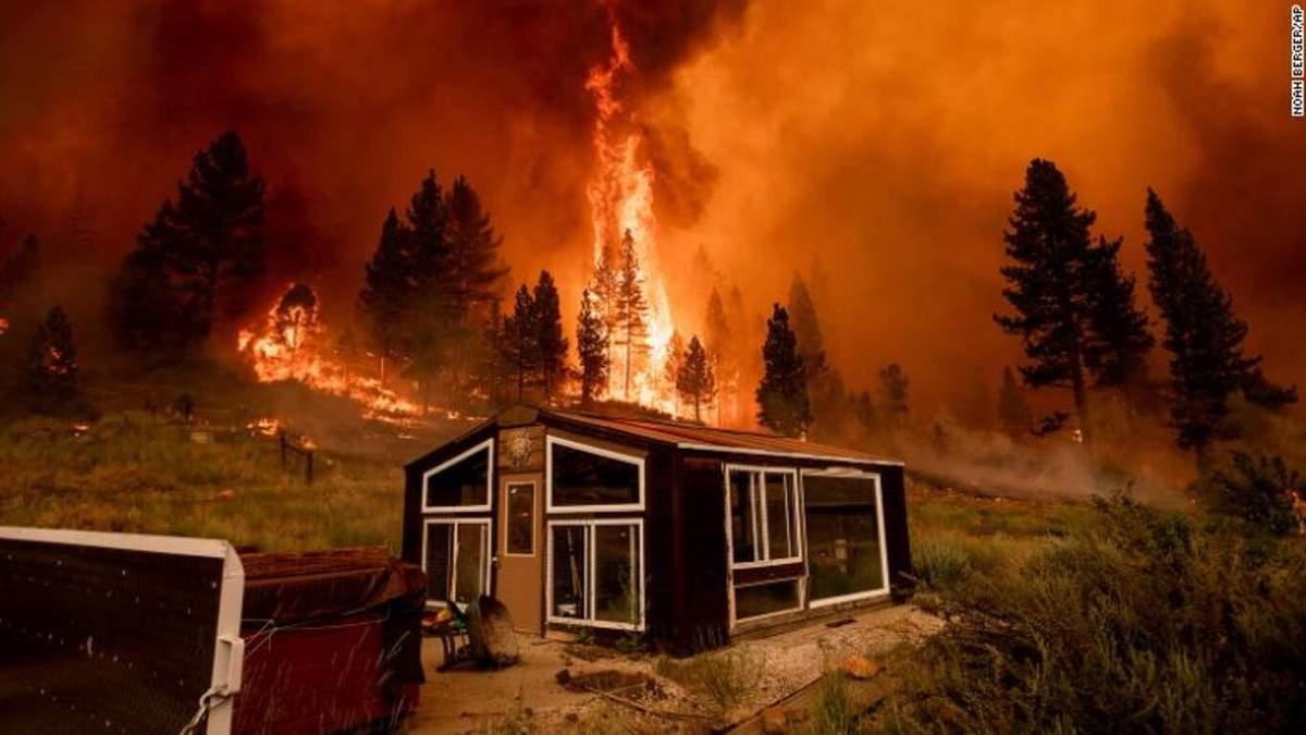 Пожары на Западе США: огонь уничтожил сотни тысяч гектаров леса - фото