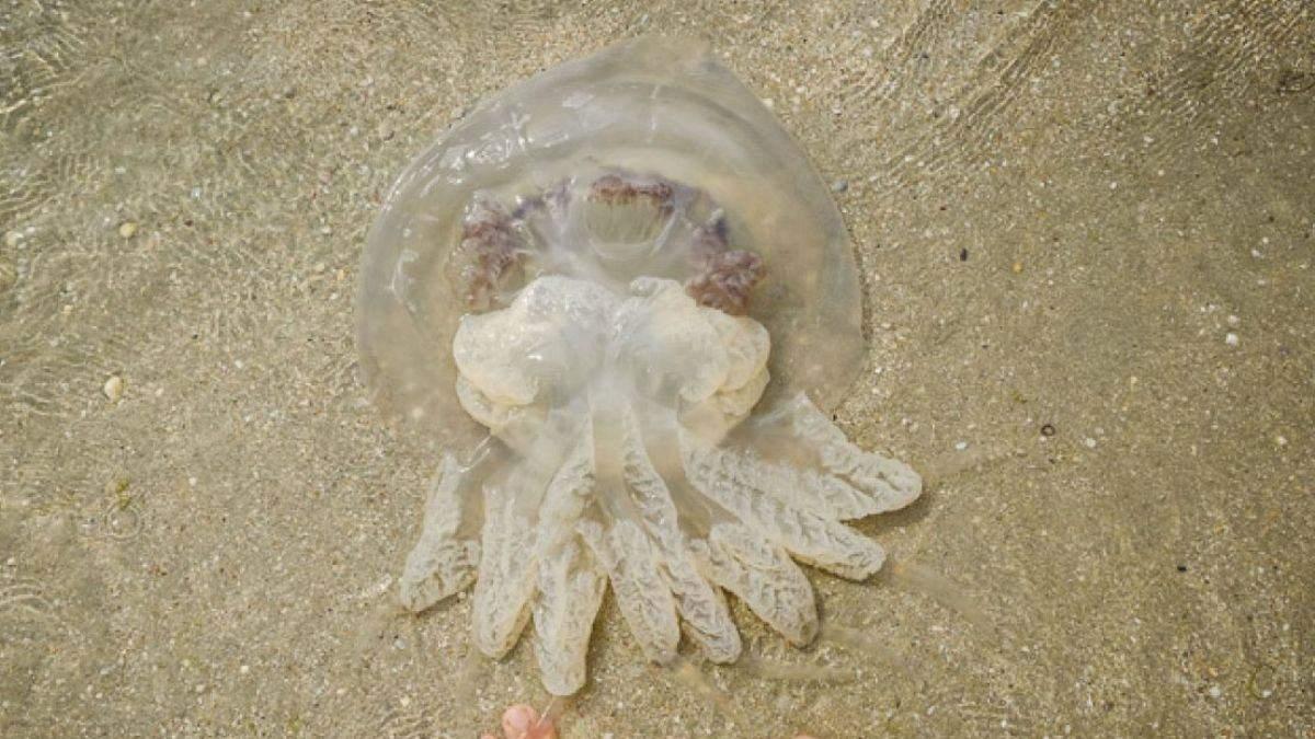 Навала медуз триває: на яких українських курортах неможливо купатися