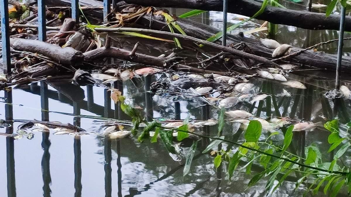В Голосеевском парке в Киеве на ставках погибли птицы и рыбы