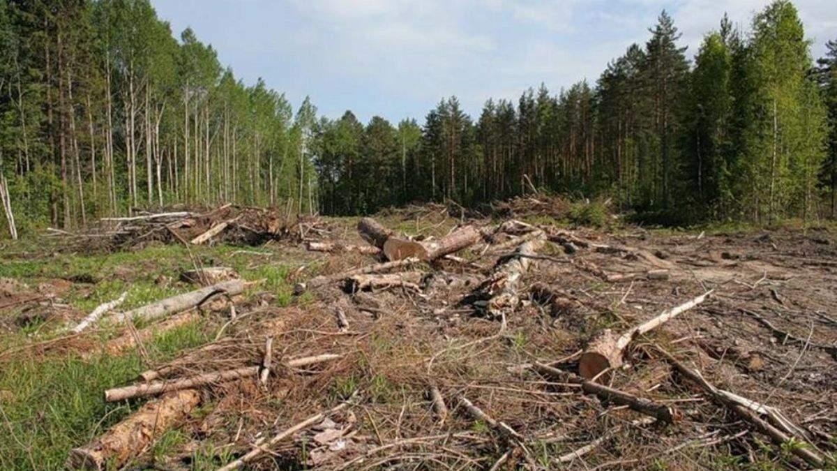 На Луганщині службовці заробляли мільйони на вирубці лісу