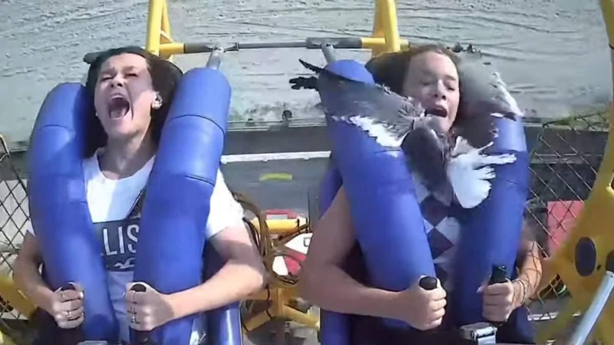 На атракціоні в США чайка врізалася в дівчину: моторошне відео