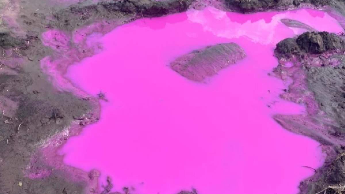 На Ровенщине обнаружили лужи с розовой водой