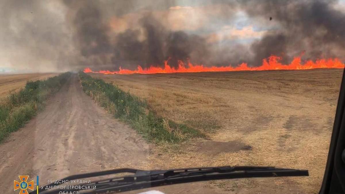 На Днепропетровщине вспыхнул пожар на пшеничных полях: фото