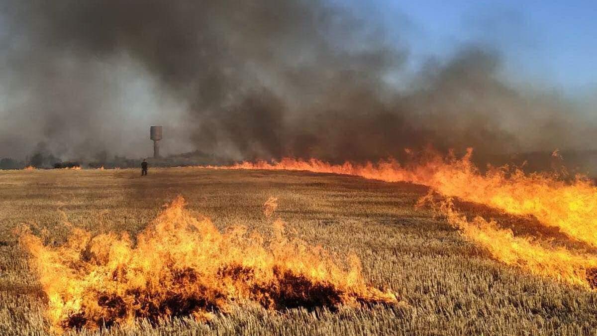 На Миколаївщині 24 липня 2021 загорілося пшеничне поле