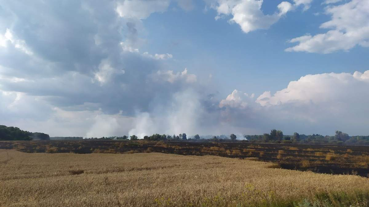 У Чернігівській області спалахнула пожежа на пшеничному полі