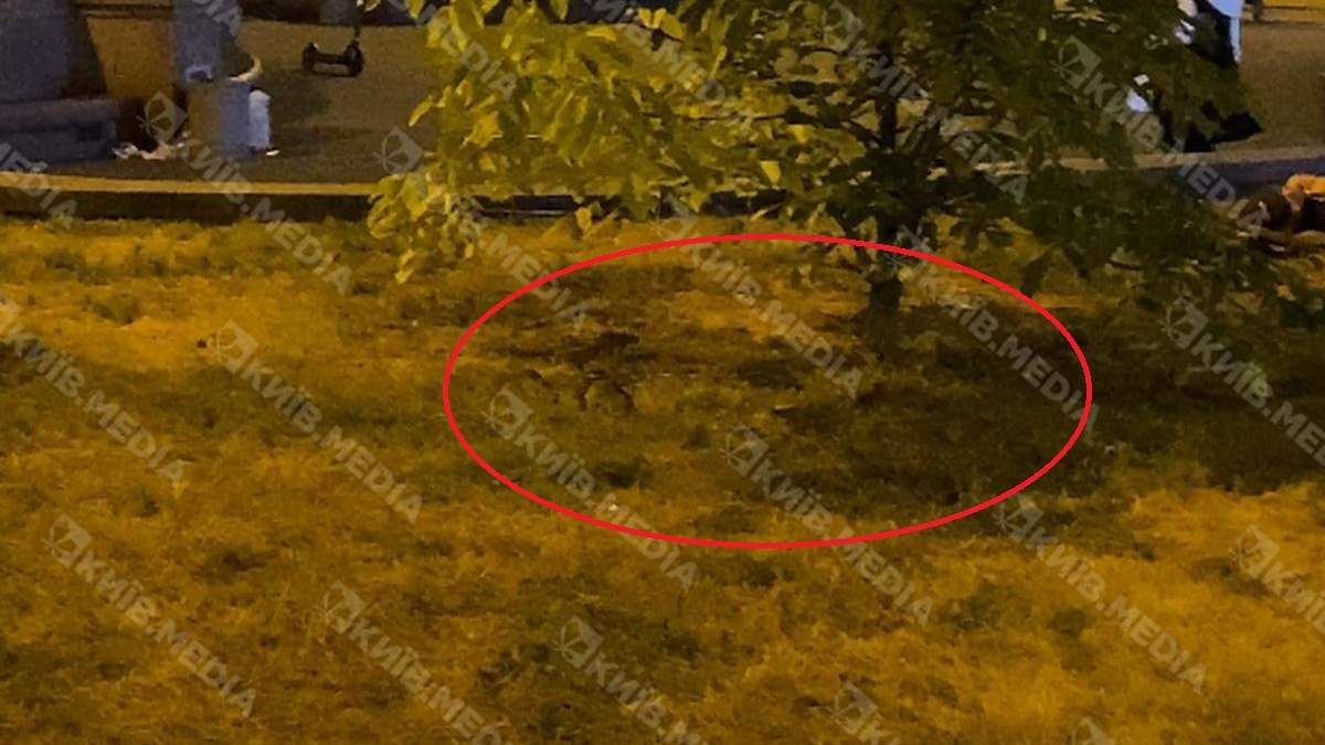 У Києві біля Бессарабського ринку побачили купу щурів