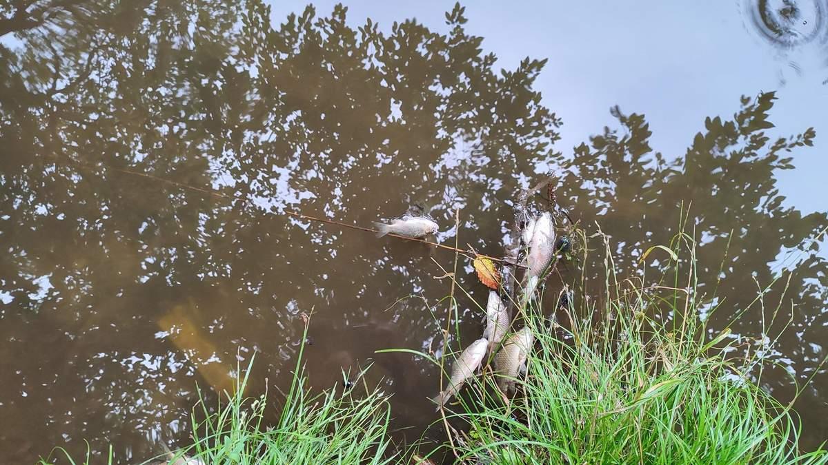 Масова гибель риби та птахів у Голосієво: у ставках виявили ртуть