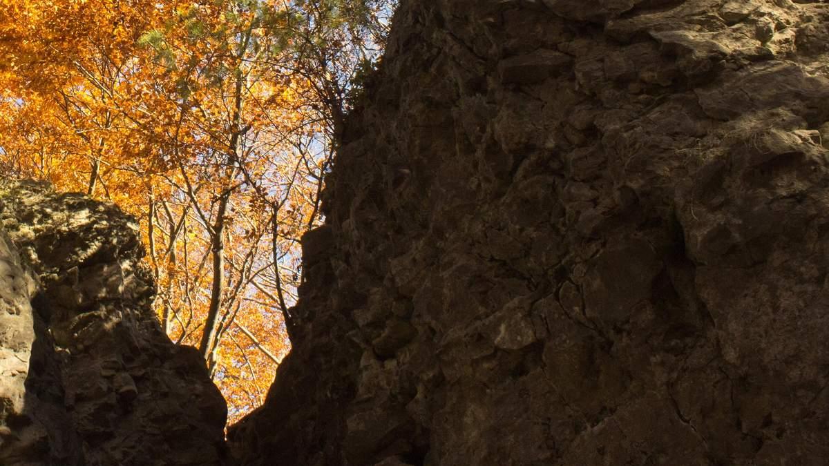 У Львова в лесу нашли взрывчатки со времен мировой войны