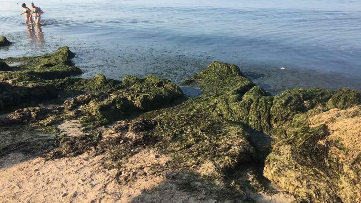 Пляжі Бердянська завалило тоннами водоростей – фото, відео