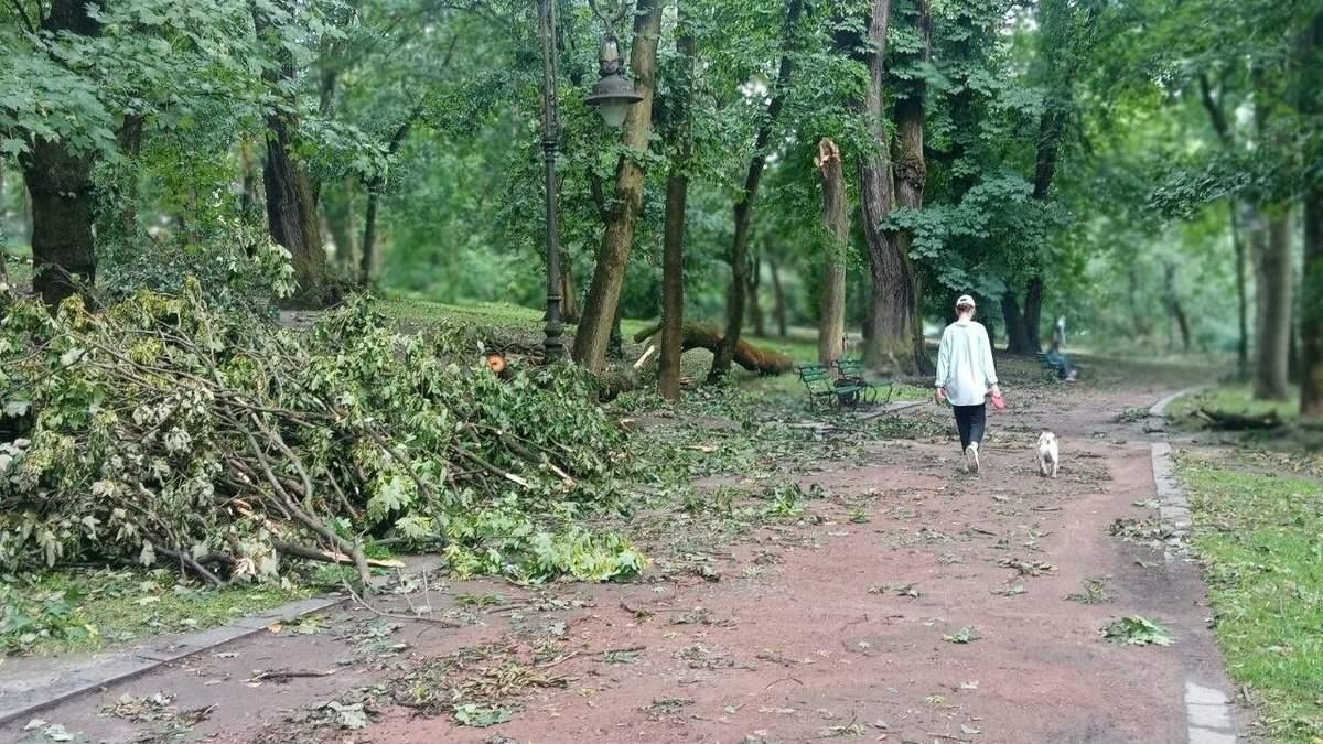 Погибли на месте: из-за урагана во Львове на молодую пару упало дерево в парке