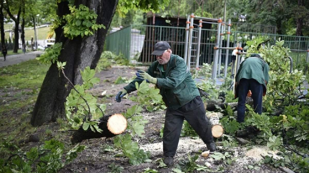 Трагедія у Стрийському парку: попередня причина падіння дерева на молоду пару у Львові
