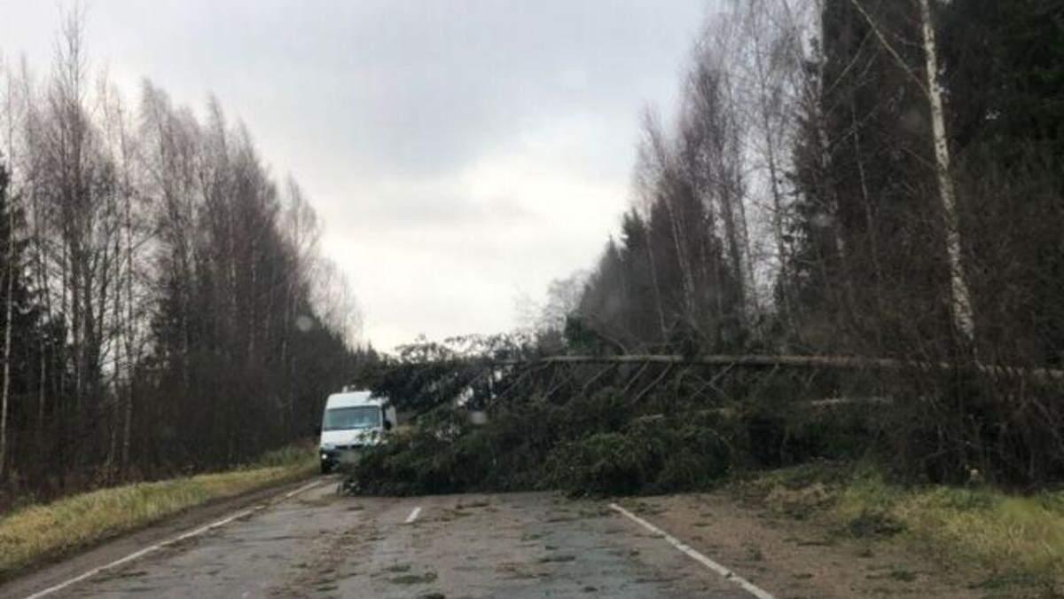 Деревья падали как спички: Россией пронесся смертоносный ураган, видео