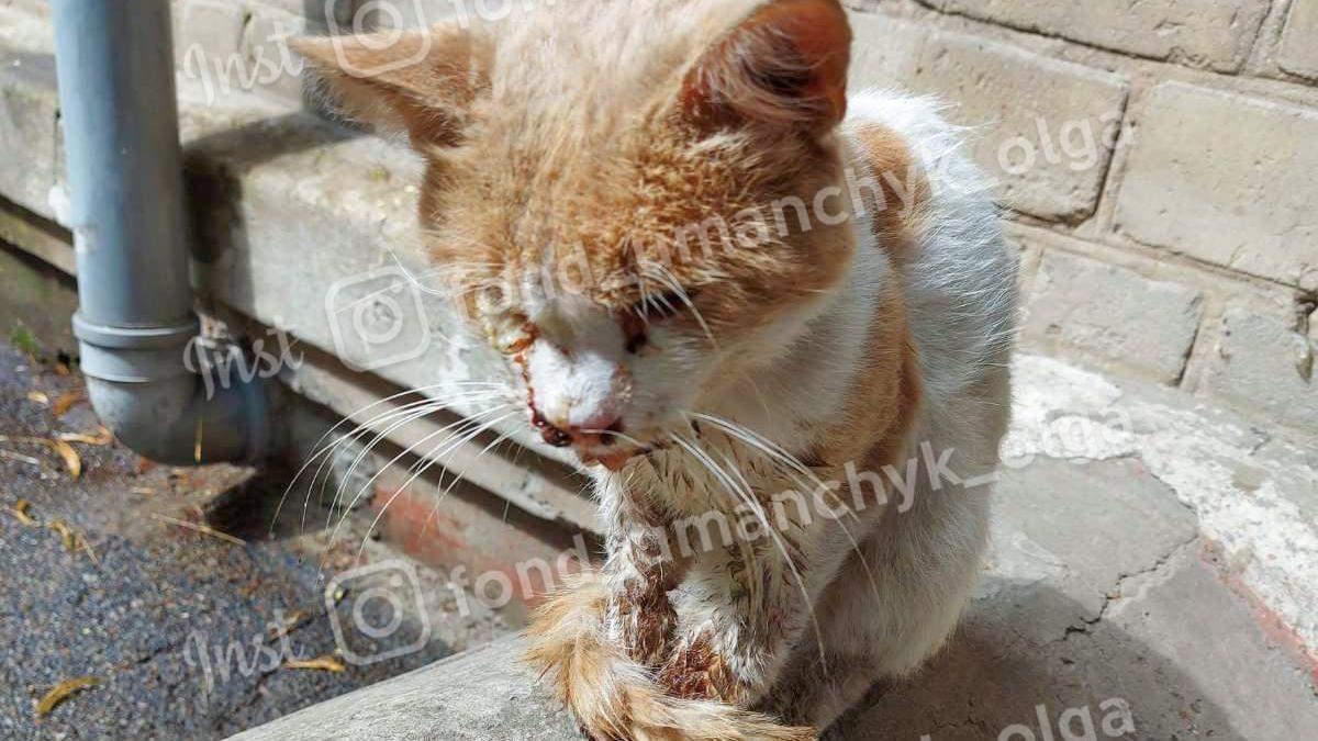 Жестко избили кота Рыжика с Днепра: какие травмы – фото