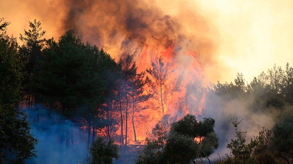 Пожары в Турции перекинулись на тепловую электростанцию: видео