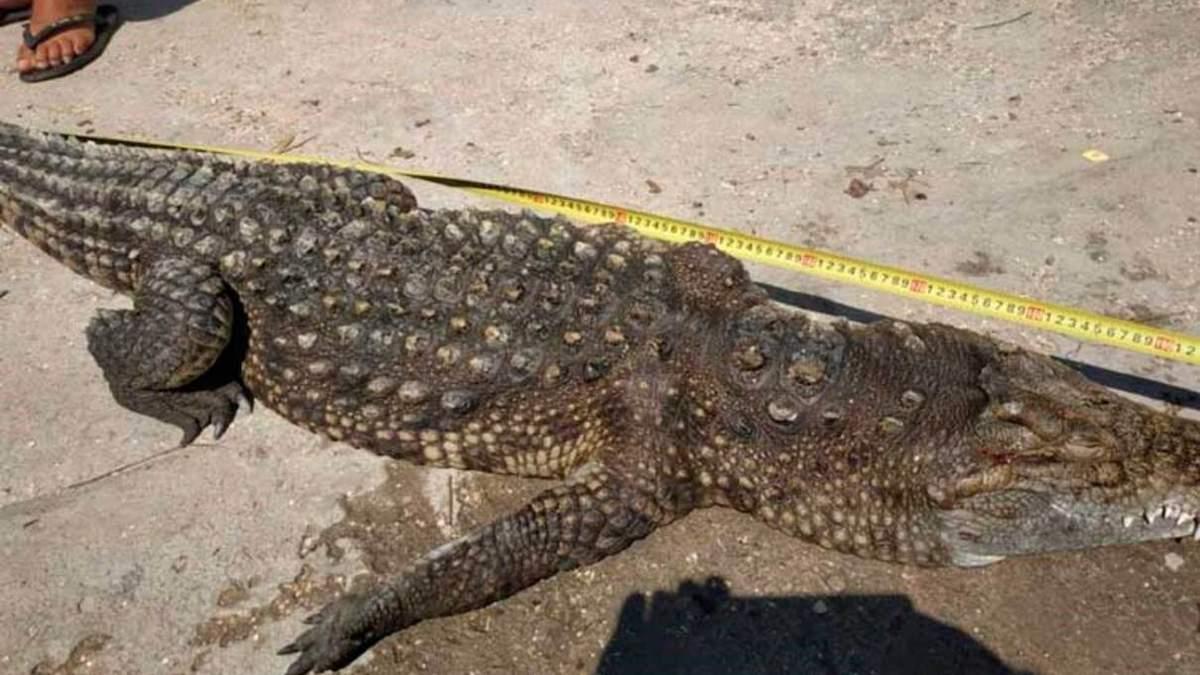На Арабатской Стрелке заметили полутораметрового крокодила: детали