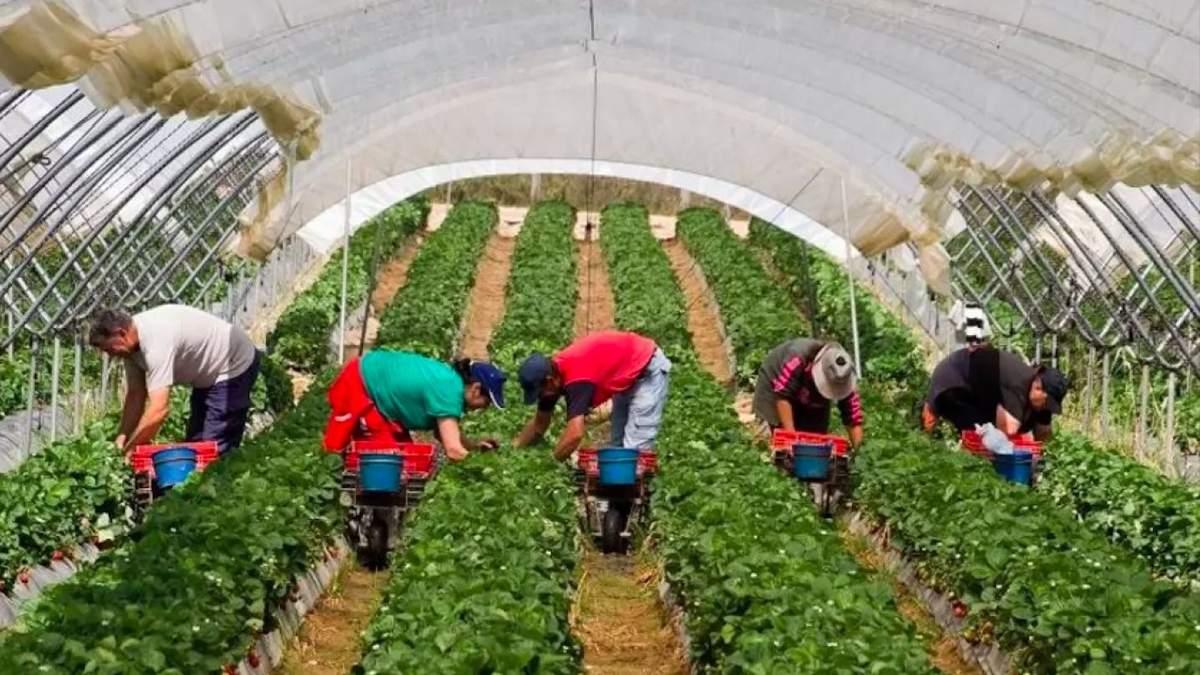 Нація, що їде: як повернути українських трудових мігрантів додому - Україна новини - 24 Канал