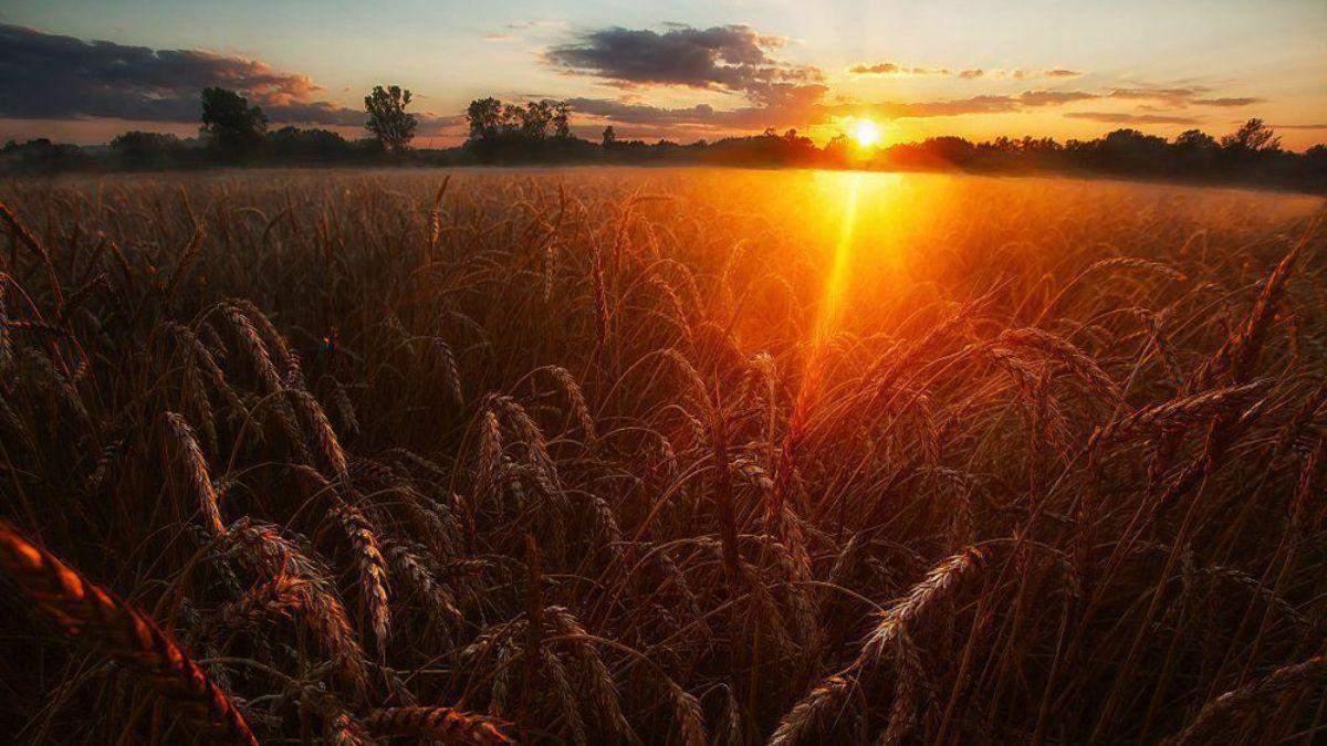 Погода на 25 серпня 2021 в Україні: що прогнозують синоптики