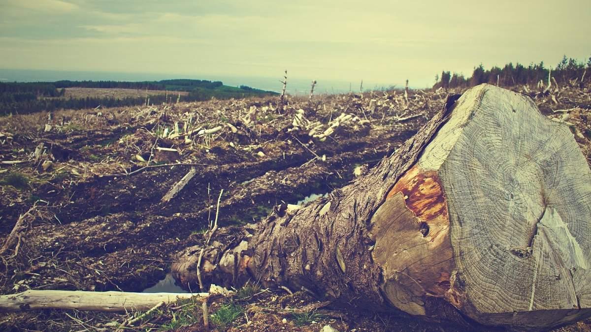 На Київщині чиновники 2 роки незаконно рубали ліс: нашкодили державі на 13 мільйонів - Київ