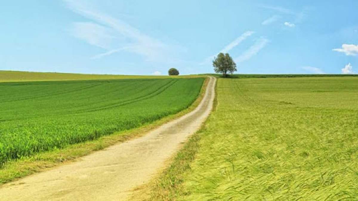 Безкоштовно, бо соратнику мера: як депутати у Черкасах виділили землю під таунхауси - Свіжі новини Черкас - 24 Канал