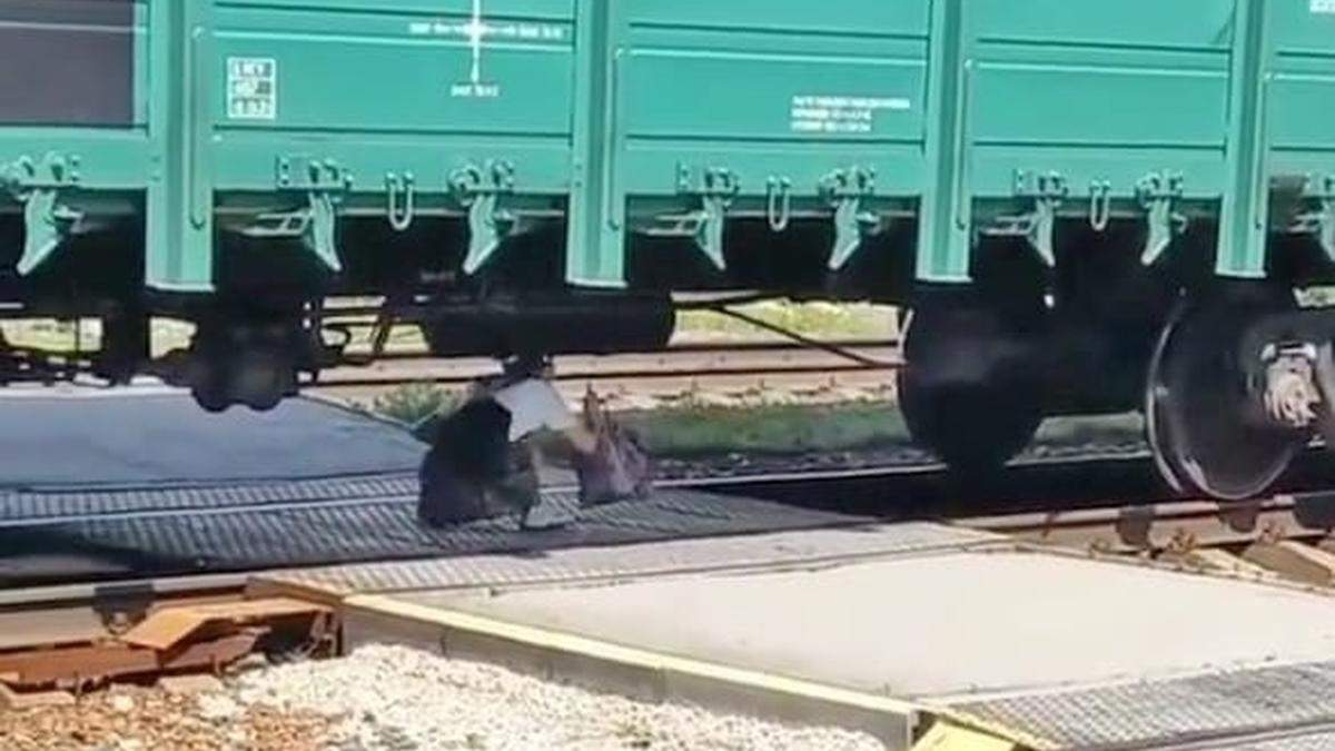 Аби встигнути на електричку: під Києвом людям довелося пролізати під вантажним поїздом - Новини Київ - Київ