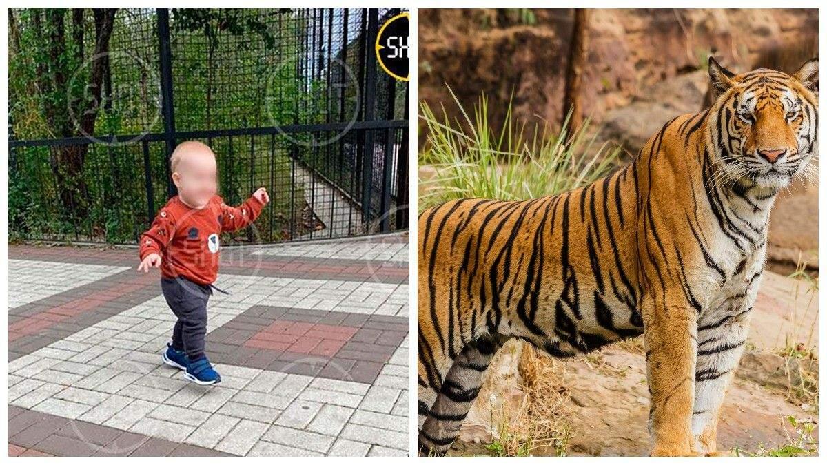 Тигр відкусив палець однорічному малюку в окупованому Криму - Крим новини - 24 Канал