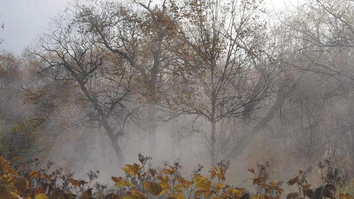 Синоптики предупредили о заморозках в Украине: когда и где резко похолодает