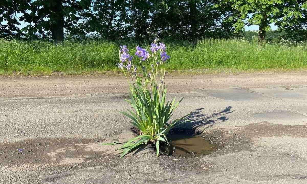 Квіти біля Крижополя