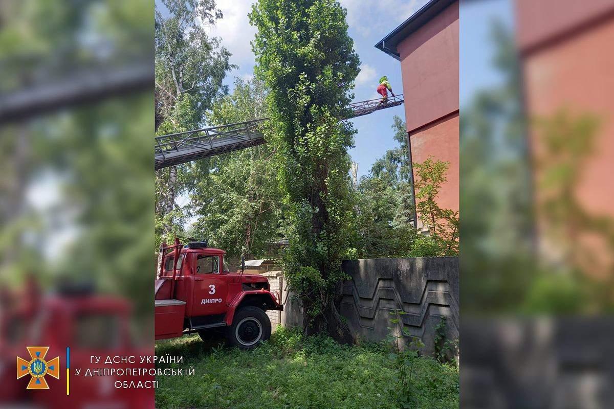 Дикі бджоли, рій диких бджіл, житловий будинок, новини Дніпра, ДСНС