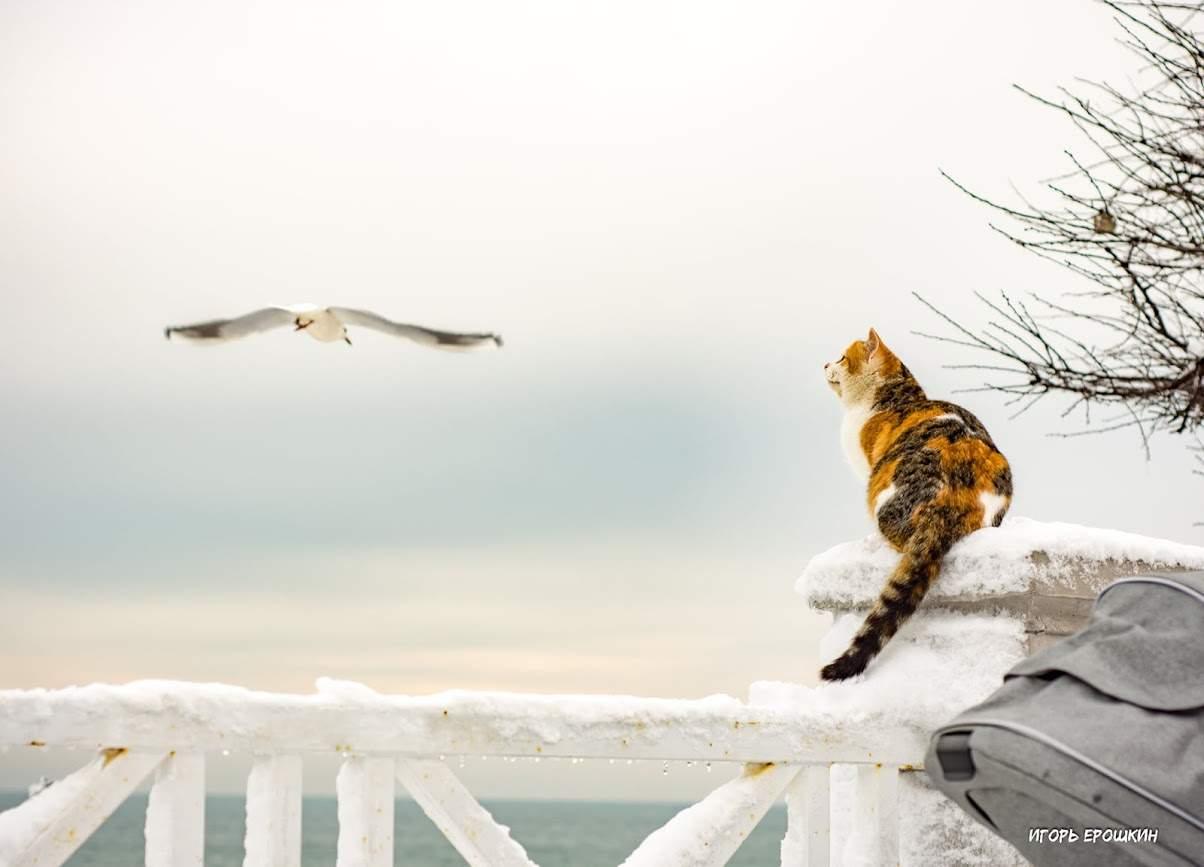 Фото Игорь Ерошкин