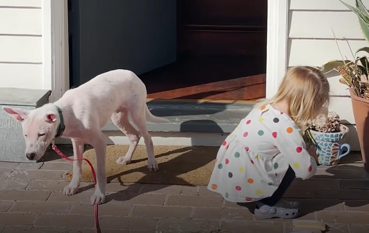 Так начиналась дружба между глухим щенком и девочкой