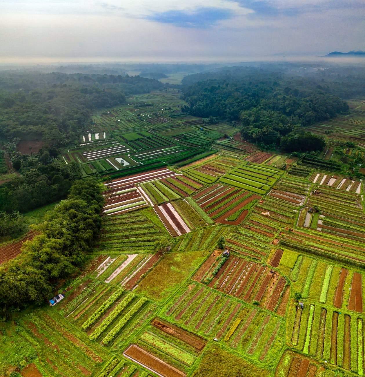 Як вироблення їжі впливає на екологію