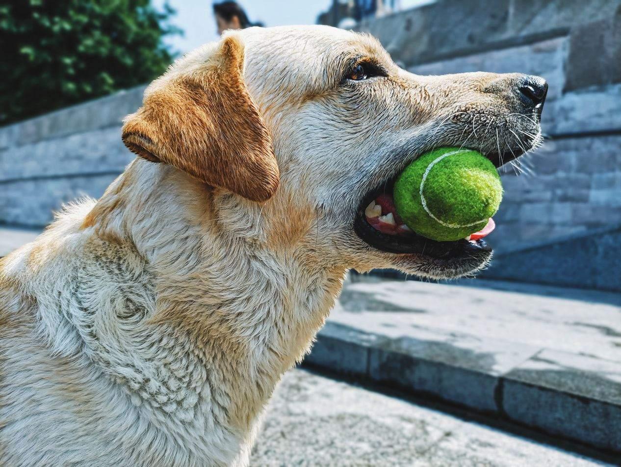 Собакам также нужно чистить зубы