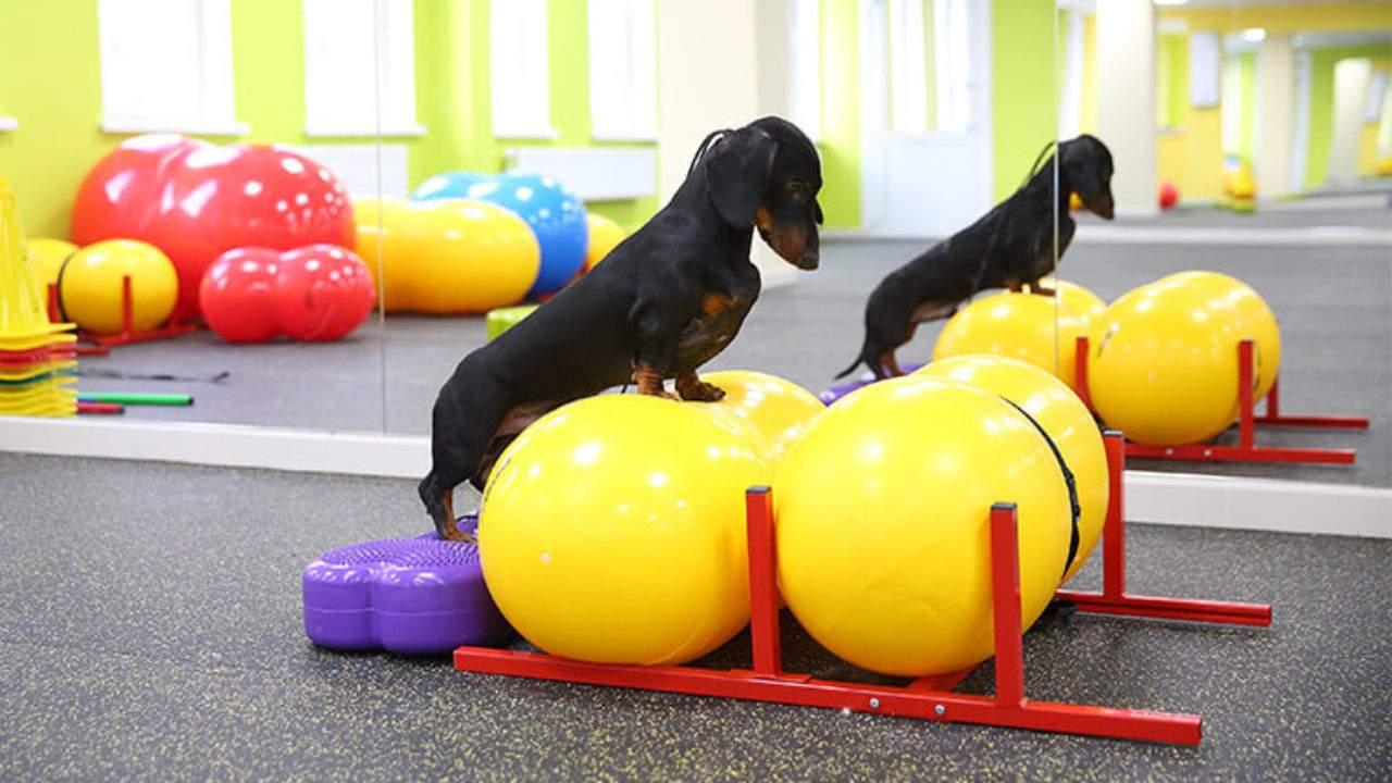 Фітнес для собак – новий напрям у вихованні і дресируванні
