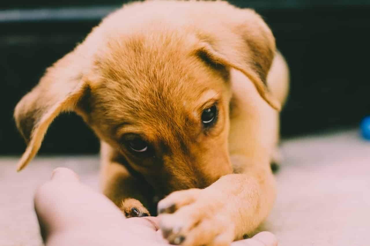 Стерилізація допомагає зменшити кількість безпритульних тварин