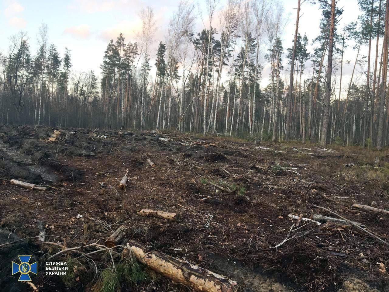 СБУ викрила масштабну вирубку лісів