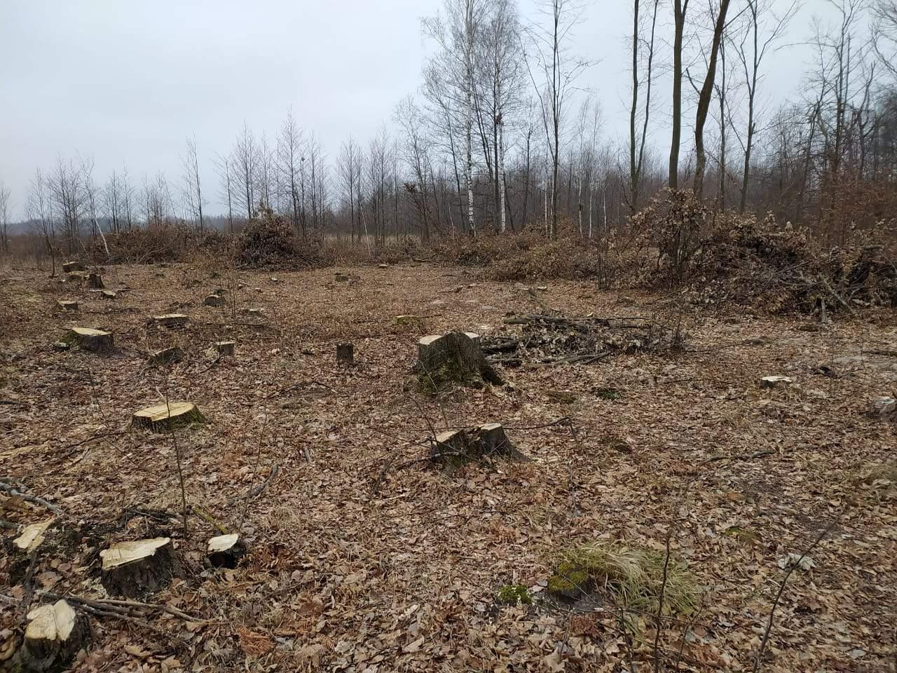 Вирубка лісів на Житомирщині