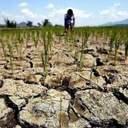 Рекордну посуху на Одещині визнали надзвичайною ситуацією державного рівня