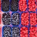 В Україні розробляють унікального робота, який збиратиме ягоди: деталі
