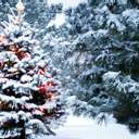 Чи буде сніг на Різдво: прогноз погоди від синоптиків