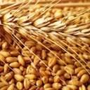 """Украина теряет миллиарды долларов из-за незаконных операций с зерном и """"теневой"""" земли"""
