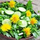 Салат из одуванчиков: что в нем особенного и как приготовить
