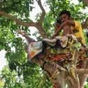 Студент провів 11 днів на дереві, щоб не заразити коронавірусом рідних