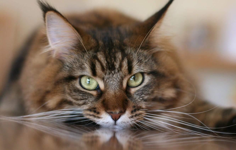 Во время сна кошка не пользуется и усами, а наоборот, прижимает их к мордочке